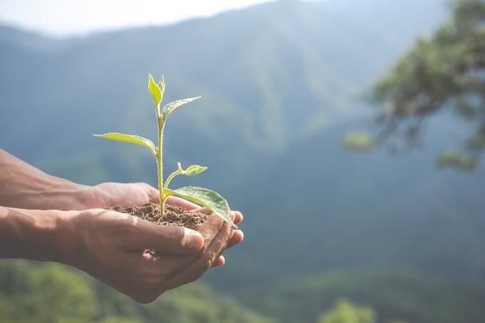 Algunos incentivos tributarios en materia ambiental